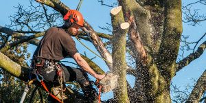 Tree Removal Long Island